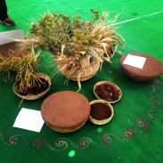 SEED CONSERVATION TRADITIONAL METHODS