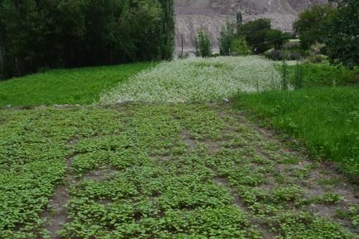 sprawling-lush-fields