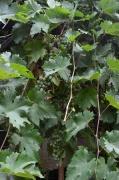 tons-of-walnuts