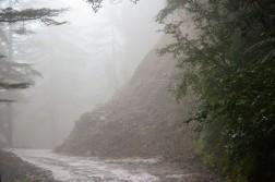 enveloped-by-fog