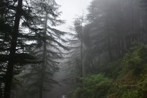 trees-and-mist