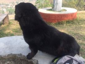 KALU THE GENTLE DOG