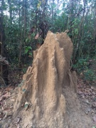 TERMITE MOUND - SO IMPORTANT TO ECOSYSTEM