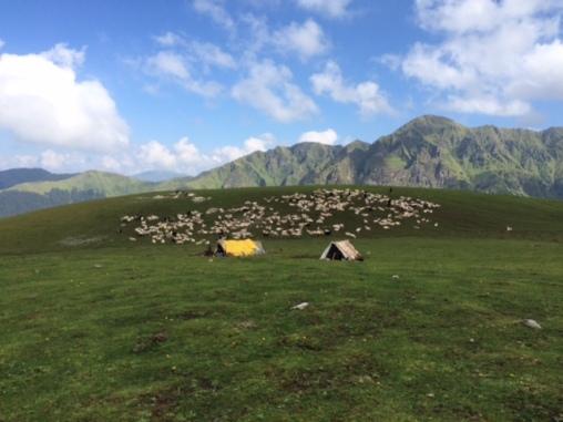 SHEEP MEADOWS AND SHEPHERDS