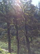 THOSE TREES