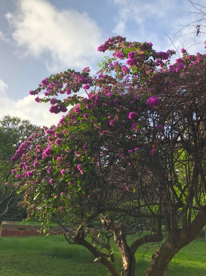 FLOWERS BLOOMING IN LALBAGH