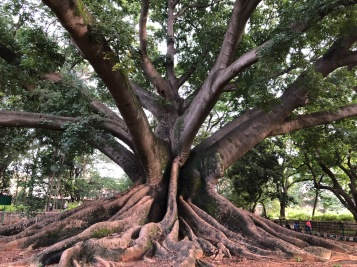 LOOK AT THIS TREE - LALBAGH
