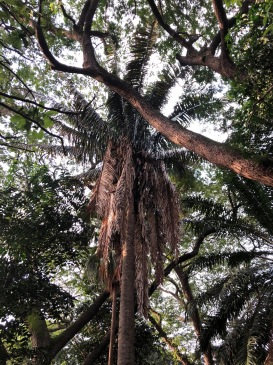 TREES AT LALBAGH