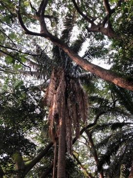 TREES AT LALBAGH