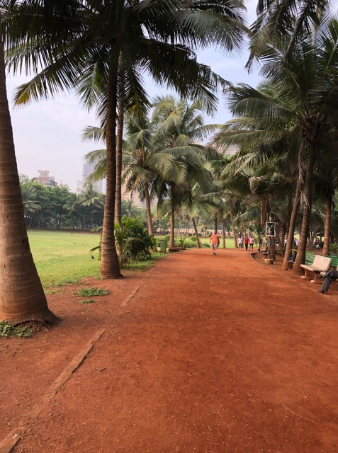 COCONUT TREES AND THE PATHS