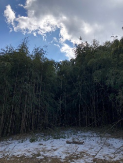 CLEARING IN THE BAMBOO FOREST