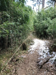 SNOW AND BAMBOO FOREST