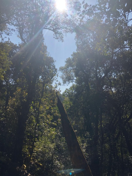 THE SUN RAYS KISSING THE FOREST