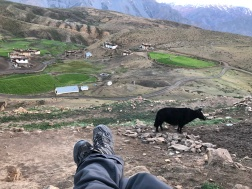 A VIEW OF THE LANDSCAPE AND ZEBU