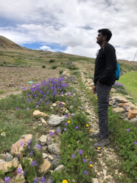 BHIM AND WILDFLOWERS